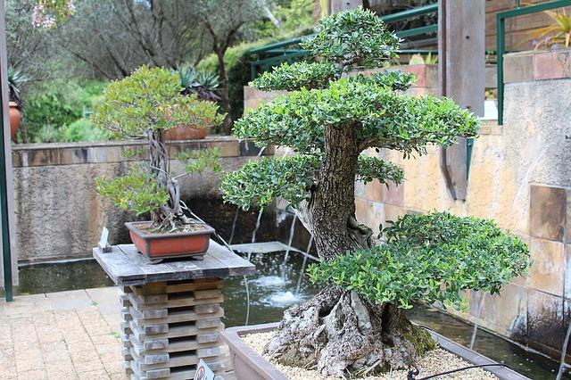 bonsai v zahradě