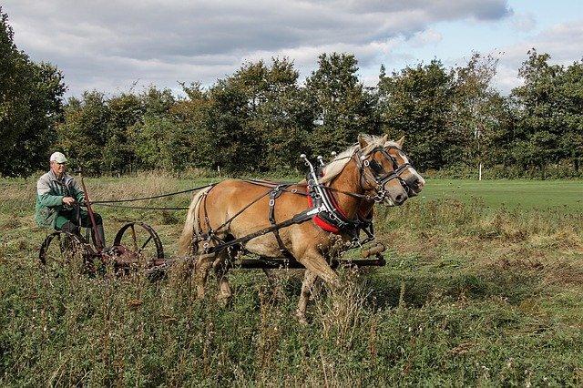 orba s koňmi
