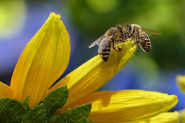 včely na květu
