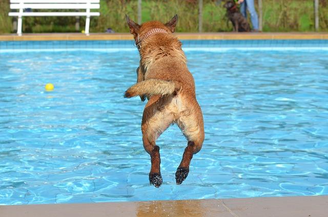 skok psa do bazénu