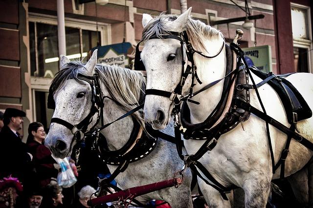 koně v postroji